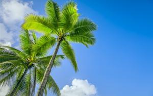 081215_fleurir comme un palmier